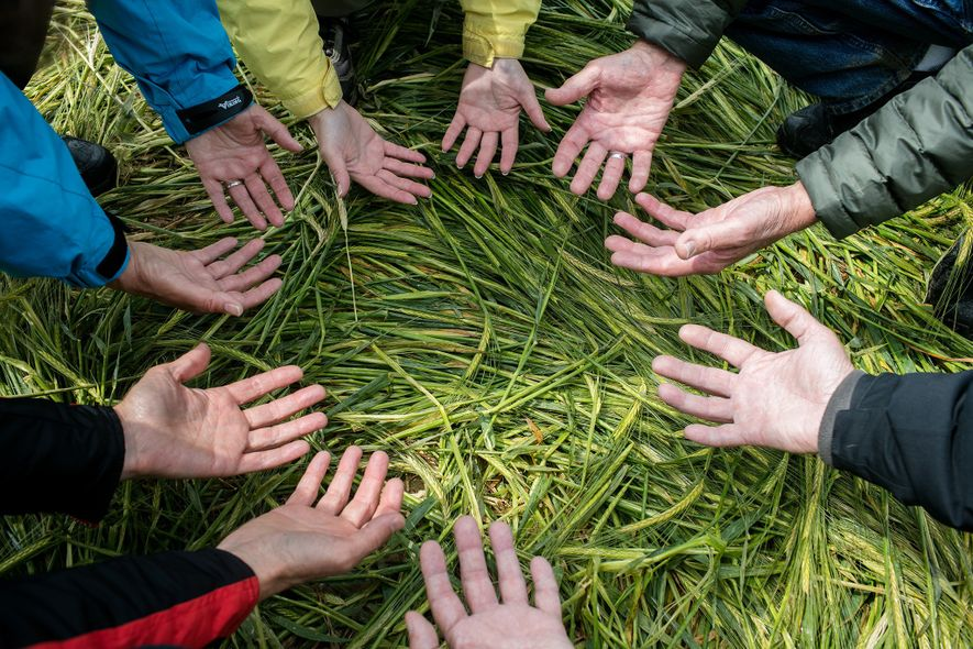 Gary King, a crop circle researcher and guide, leads a tour near Cerne Abbas, West Dorset, ...