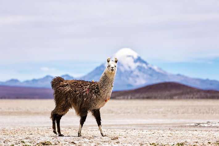 Commonly known as the driest place on the planet, the Atacama Desert in Chile still bursts with ...