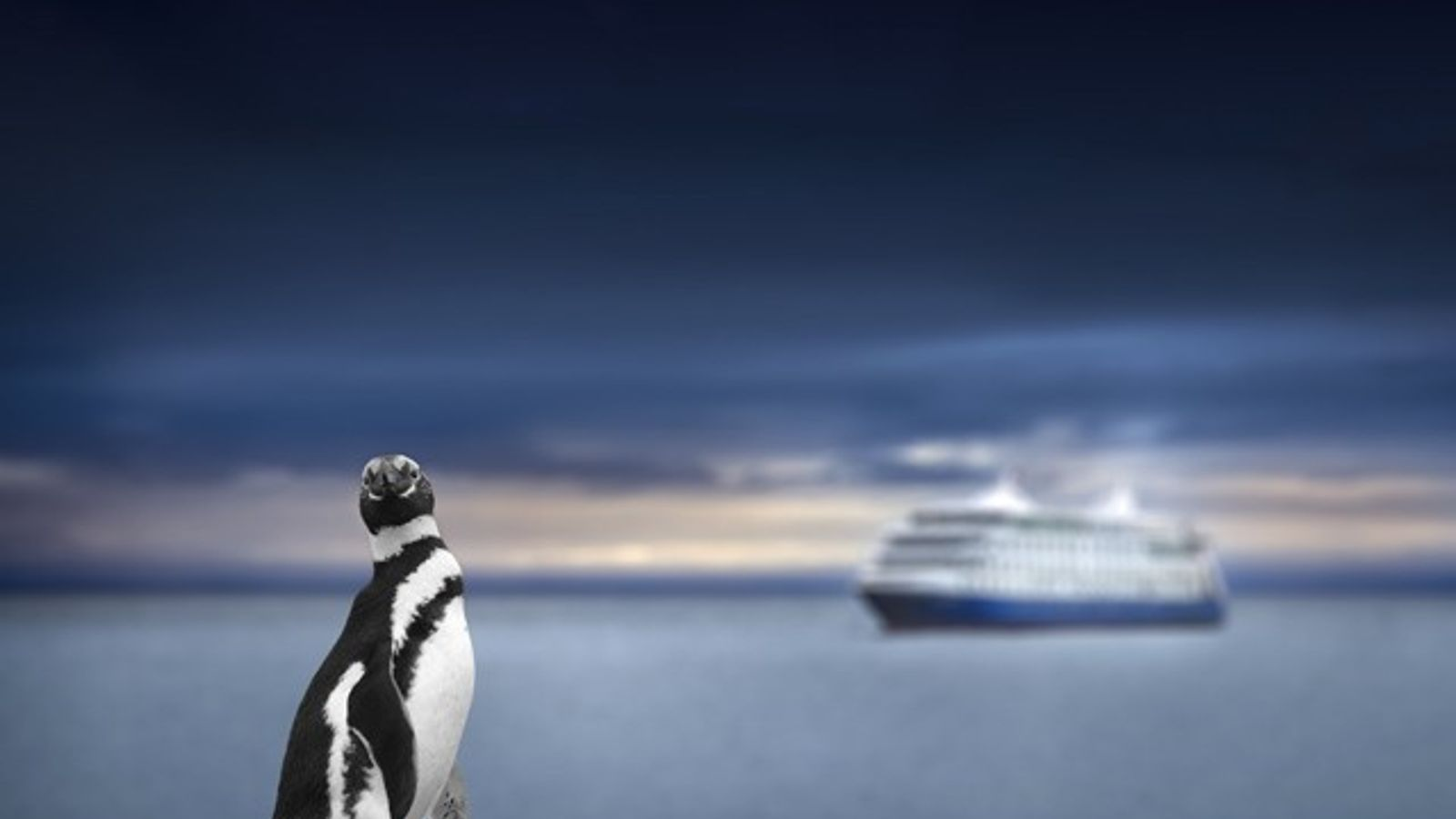 A penguin in front of a cruise ship