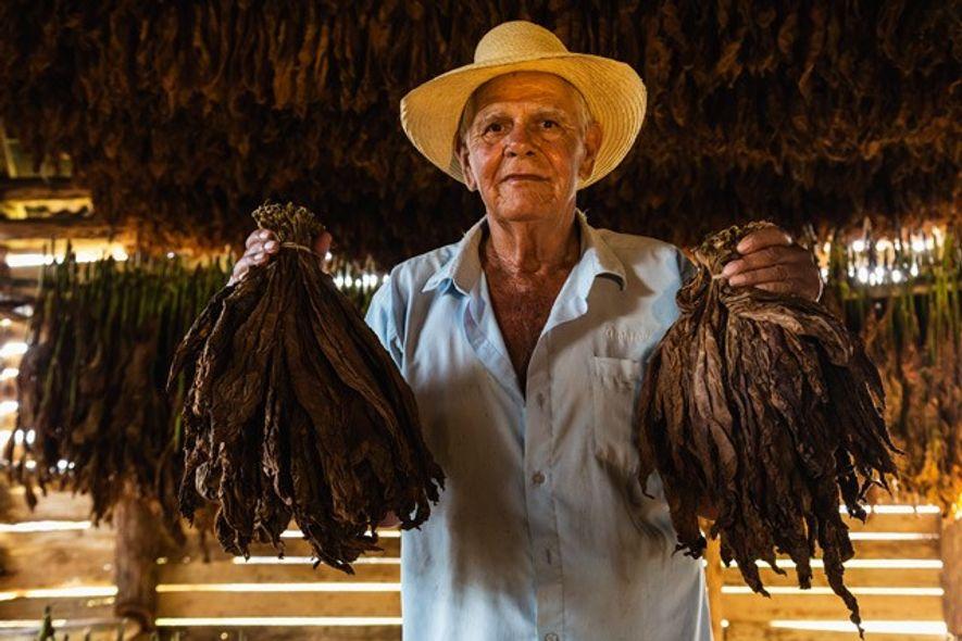 Tobacco Farmer in Tobacco Drying Barn, Cuba.