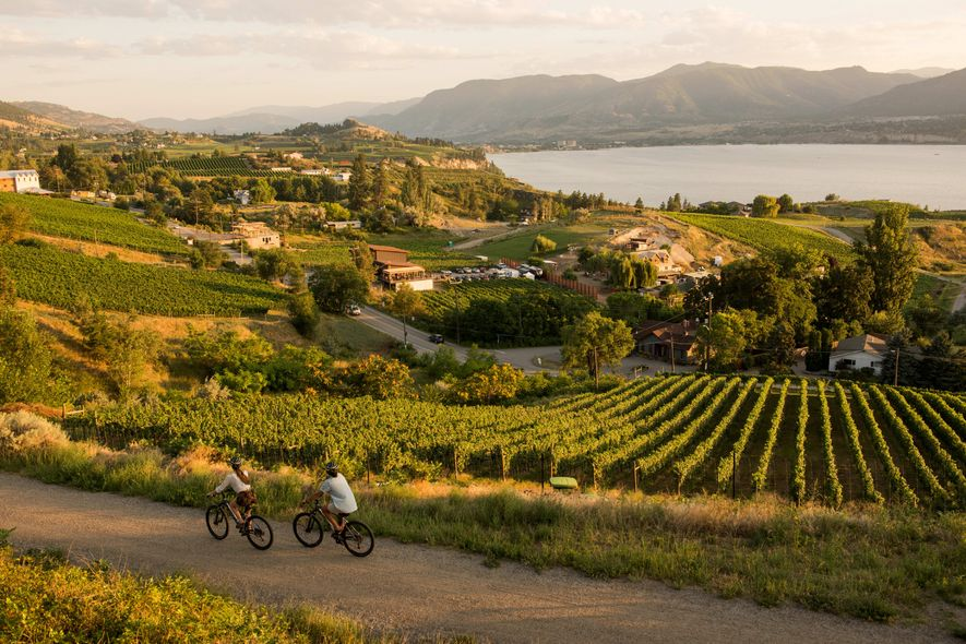 Cycling past vineyards on the Kettle Valley Railway between Penticton and Naramata.