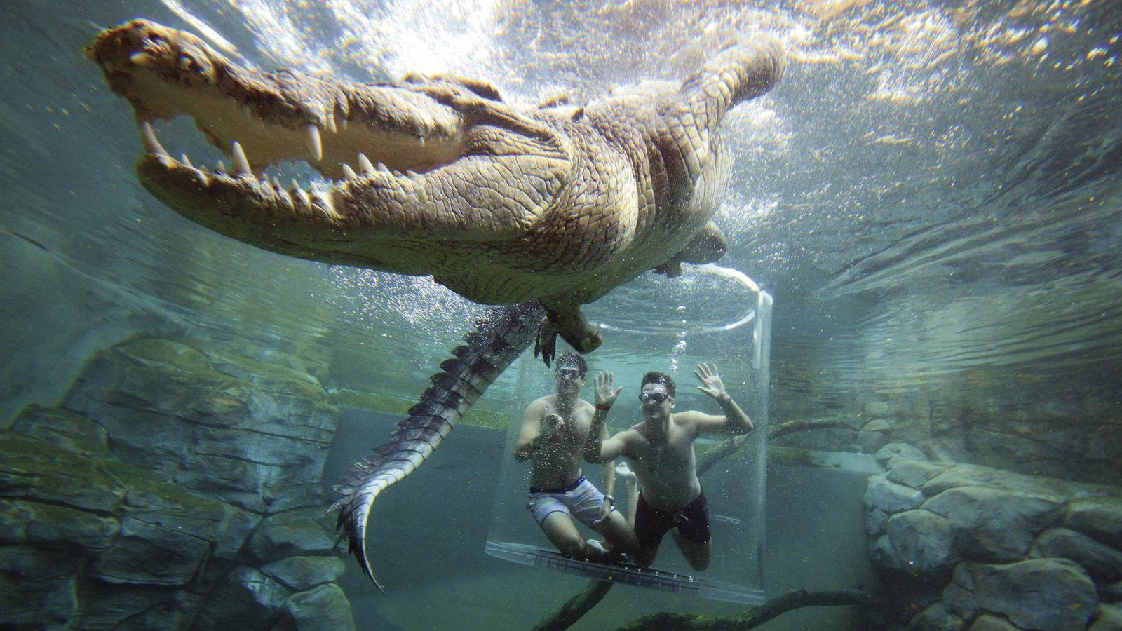 Crocodile experience at the Crocosaurus Cove