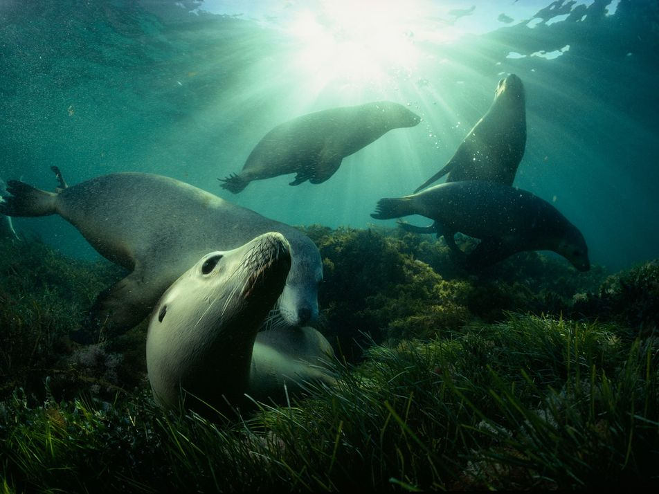 32 Astonishing Photos From a Career Spent Underwater