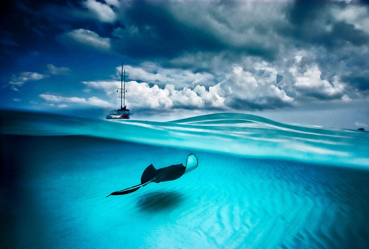 A stingray and sailboat can be seen in North Sound, Grand Cayman. This protected sand bar ...