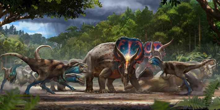 The Dueling Dinosaurs fossil may represent a lethal struggle between a Triceratops and a juvenile T. ...