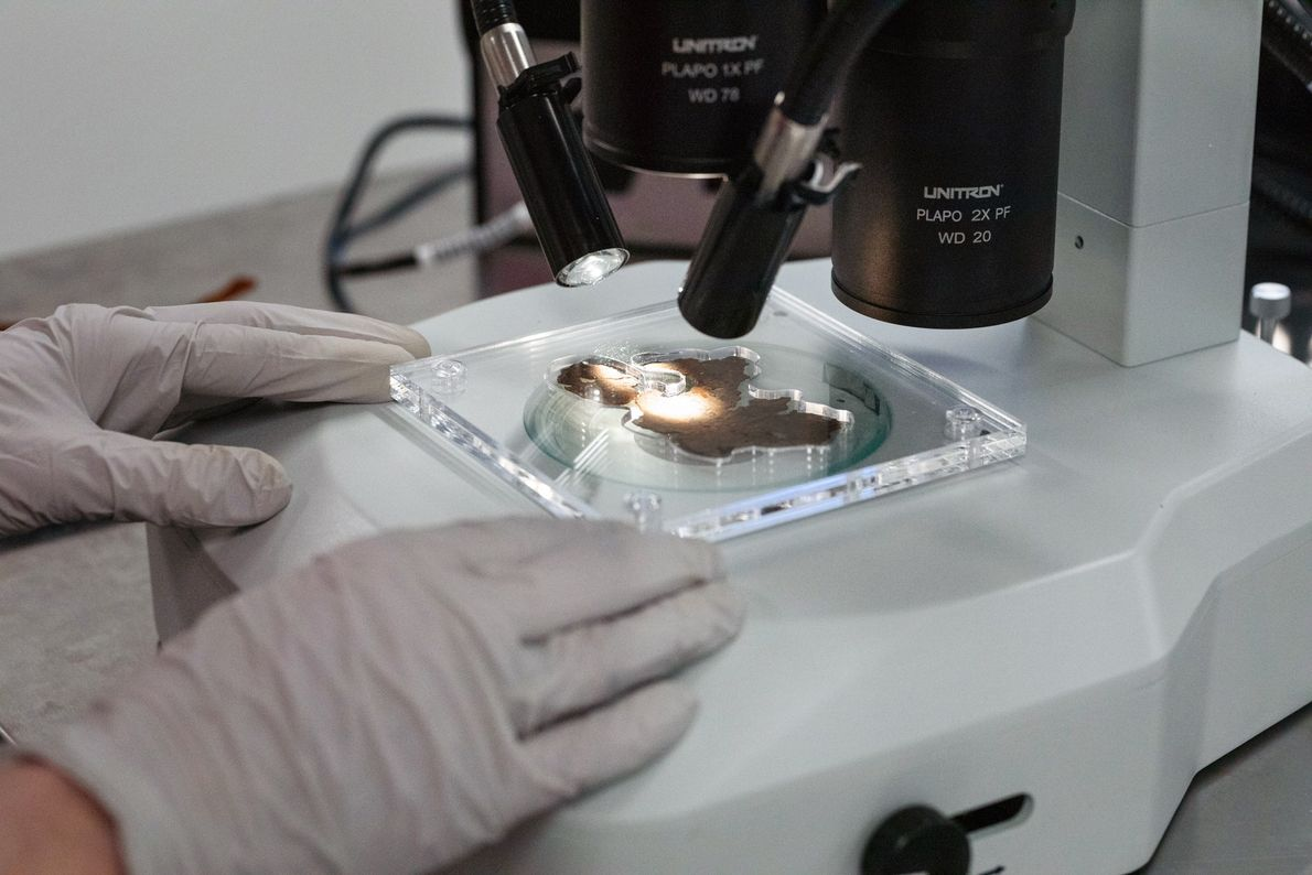 Researchers carefully examined the surfaces of all 16 fragments under high magnification—all while keeping the fragile, ...