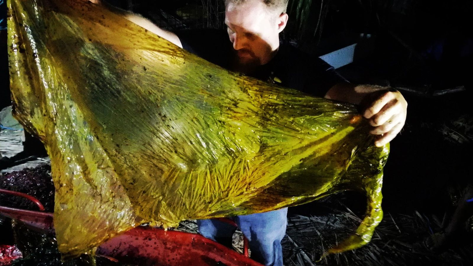 Researchers pulled nearly 90 pounds of plastic waste out of the stomach of a young cuvier ...