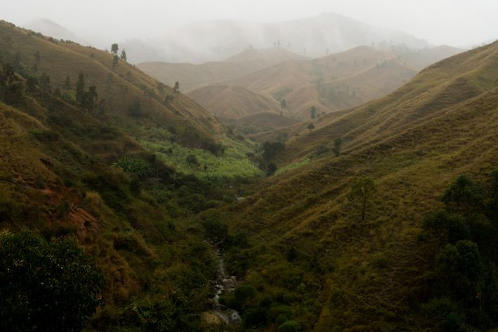 Clearing of forests threatens the island's spectacular biodiversity, key to a tourism industry worth nearly a ...