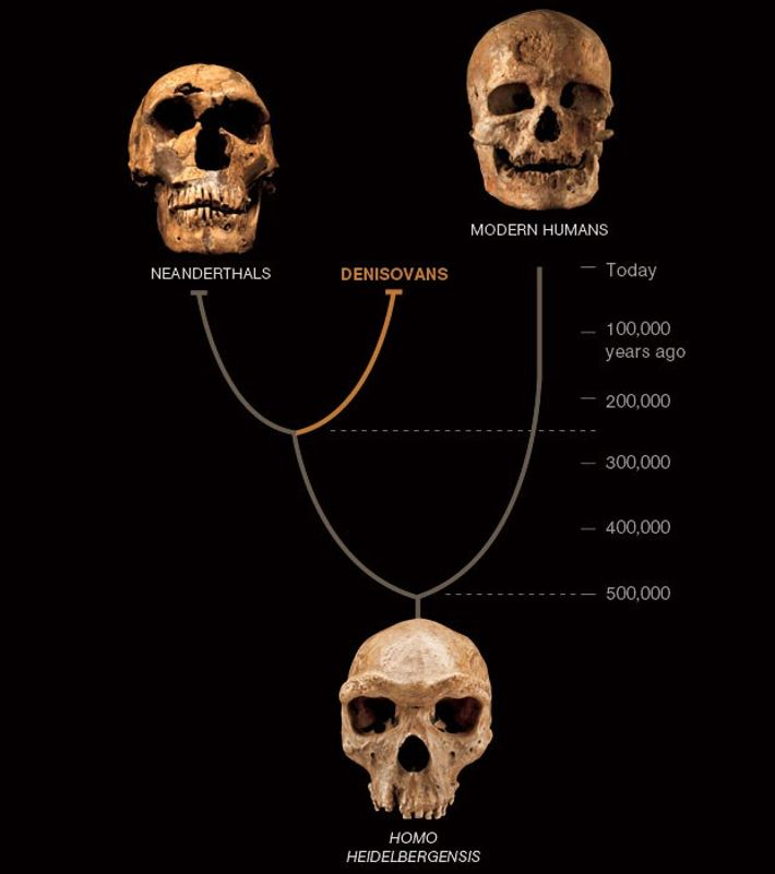 According to a 2010 study, Neanderthals and Denisovans were closely related. DNA comparisons suggest that our ...