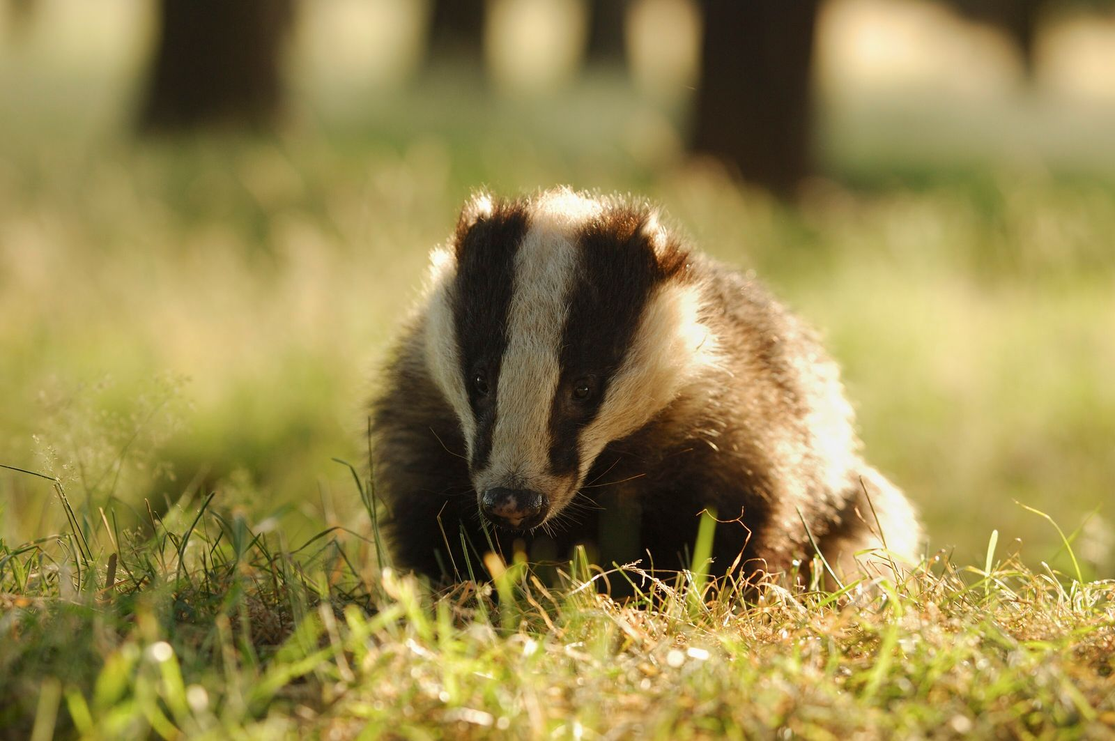Why UK wildlife could remain in the firing line despite new cull review