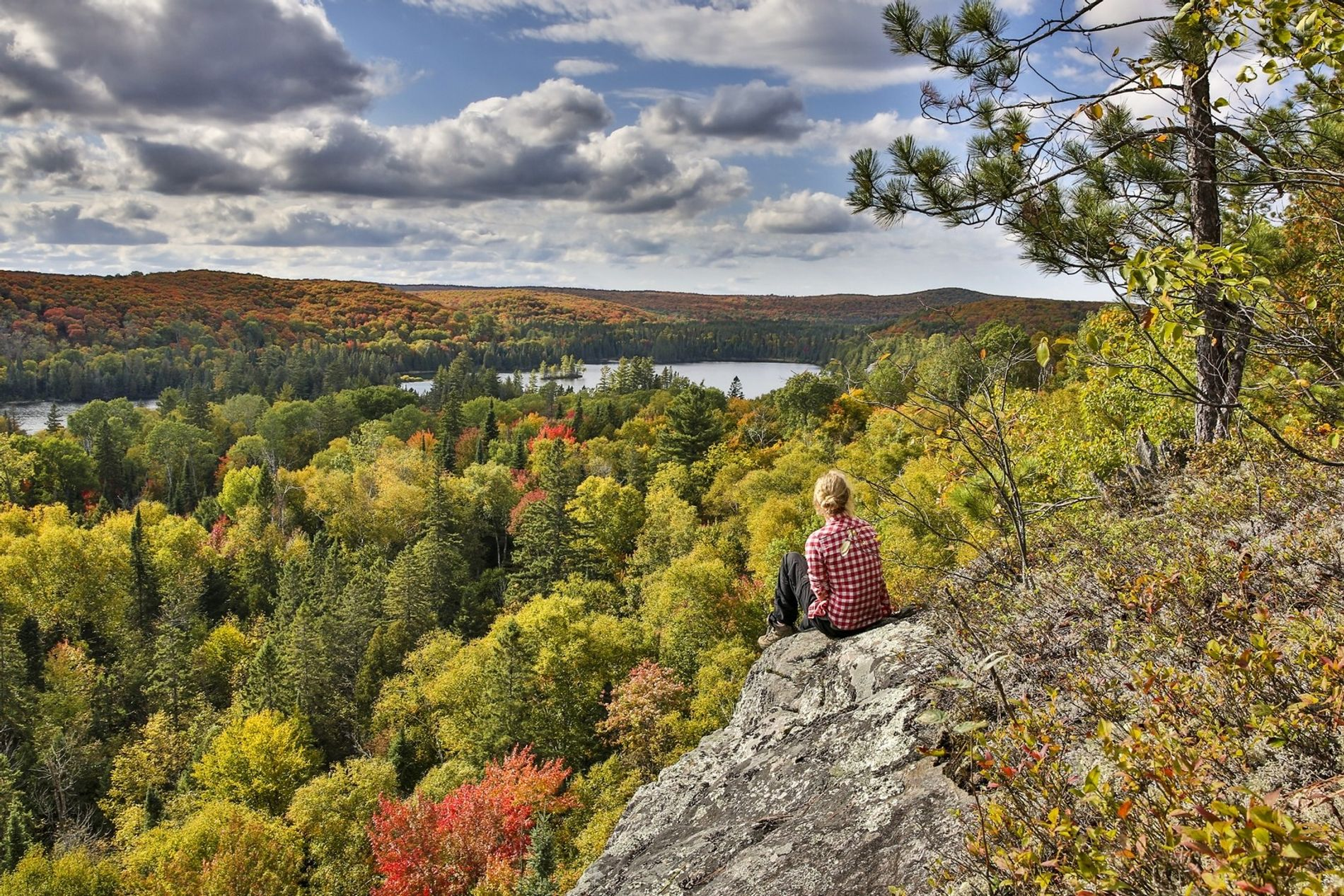 A sea of red and gold leaves in Algonquin Park - watching the changing colors in ...