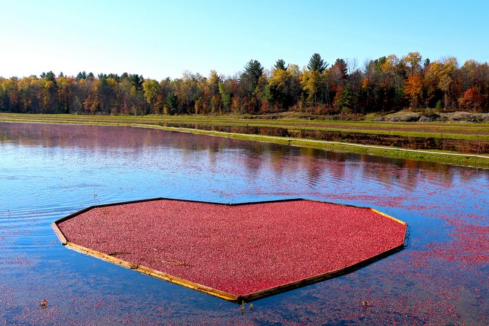 The Bala Cranberry Festival, in Muskoka, is Ontario's largest harvest festival, combining foodie events with entertainment ...