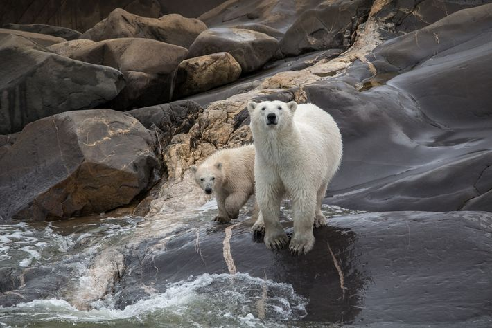 Churchill, Manitoba, is the polar bear capital of the world. Fall is the perfect time to ...