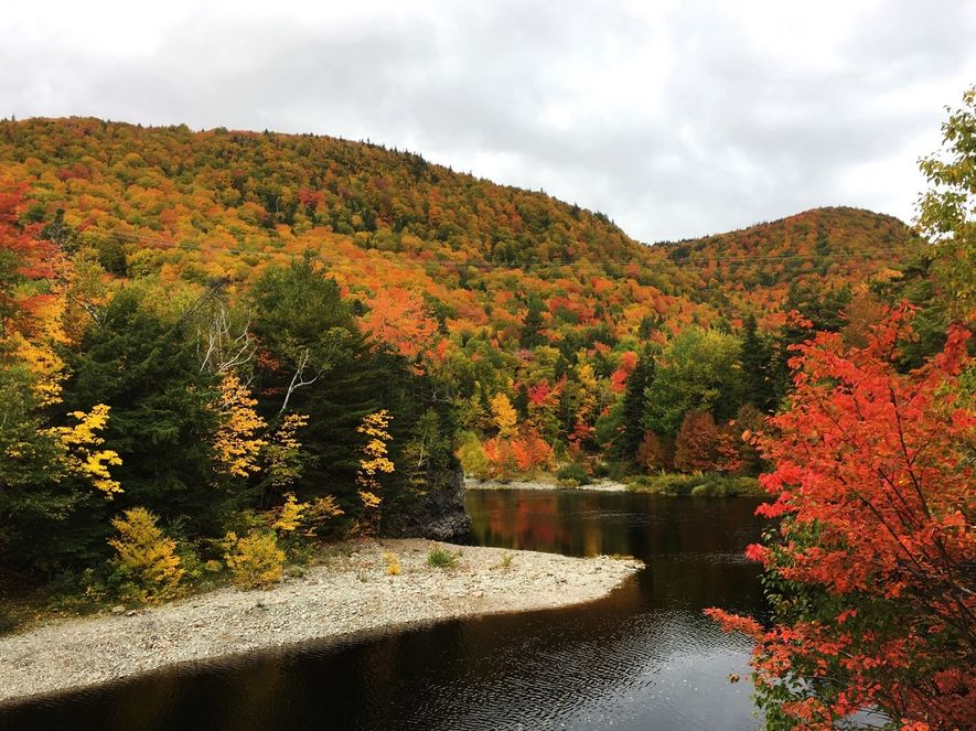 The trees along the Cabot Trail in Cape Breton glow in their fall colors.