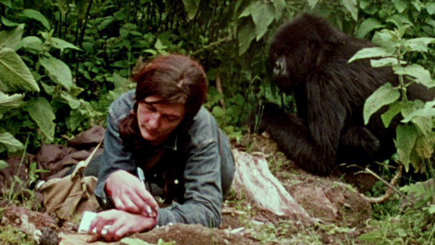 Watch: Dian Fossey's Life With Gorillas Revealed In Rare Film