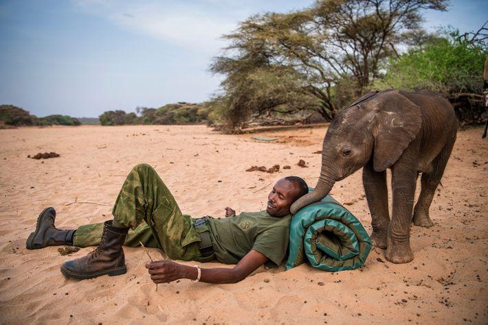 dispatches-vitale-elephants10