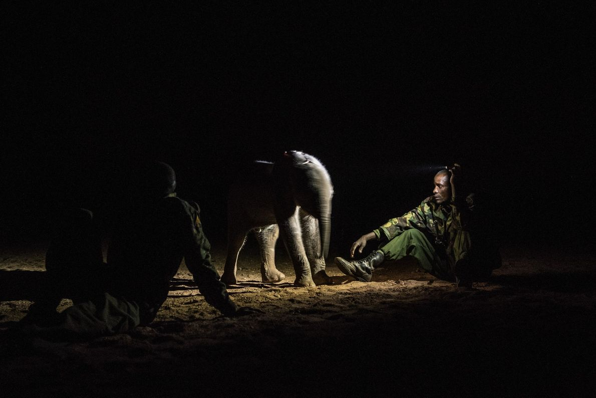 Lkalatian Lopeta (right), a Samburu wildlife ranger, and Reteti staffers guard the two-week-old Kinya in hopes ...