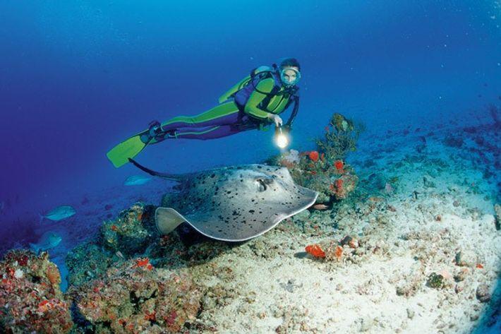 Diving with manta rays, Maldives