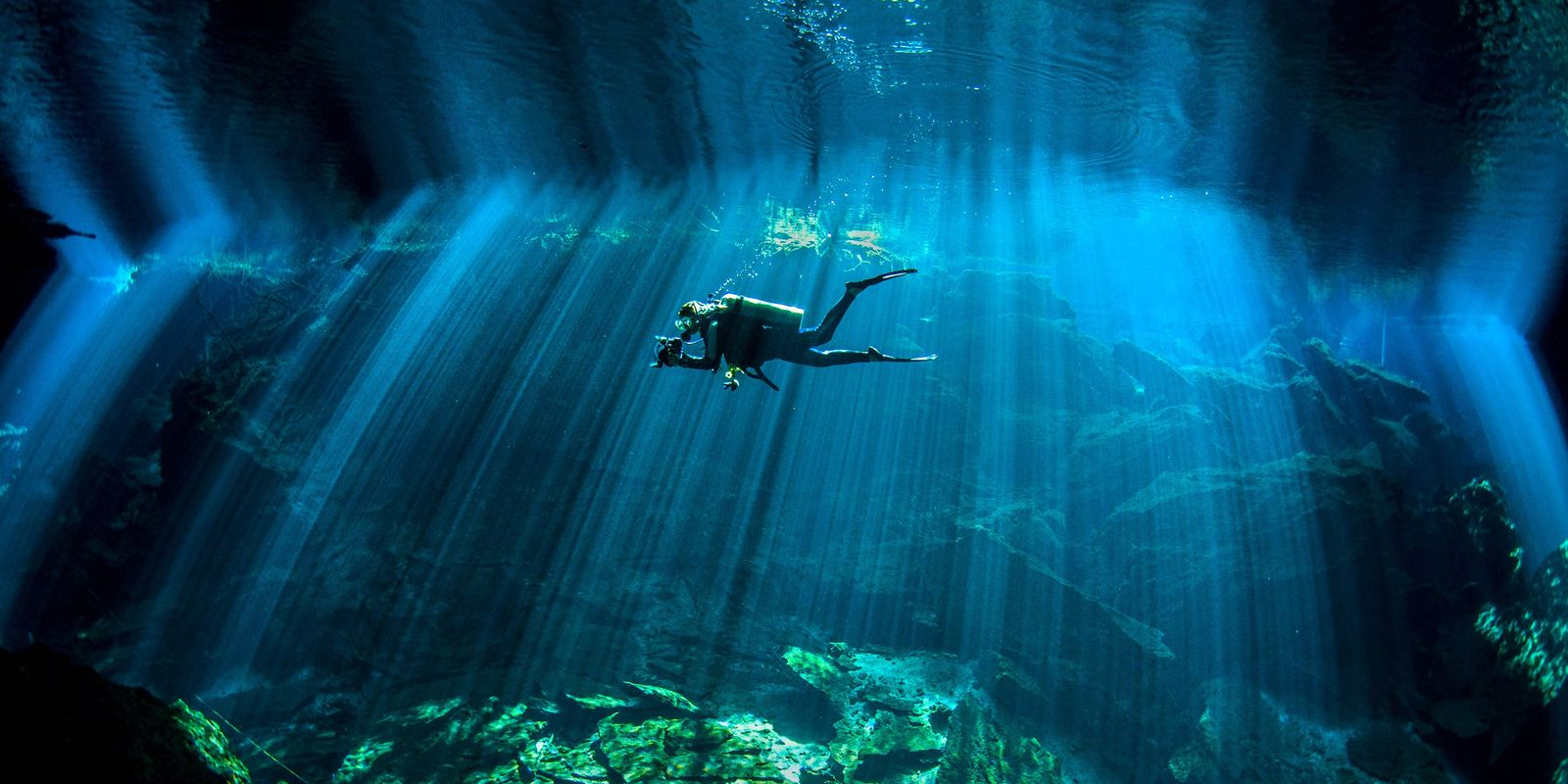 See Stunning Pictures That Take You Under the Sea