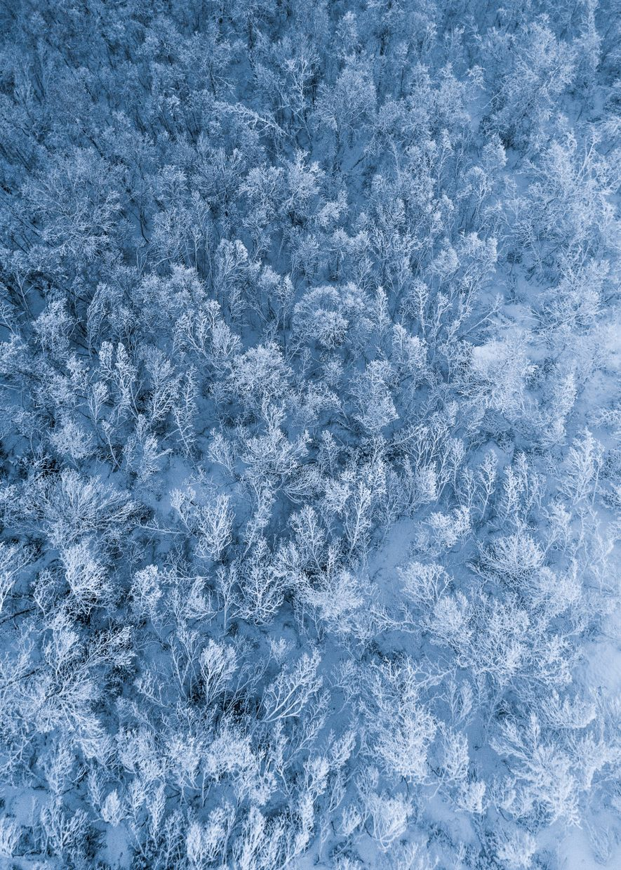 Shot from a drone on Christmas Eve, a birch forest in Harstad, Troms – fully covered ...