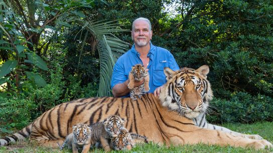 """Bhagavan """"Doc"""" Antle, posing with tigers at his Myrtle Beach Safari zoo in 2018, has been ..."""