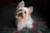 Dogs can hear their names amid lots of background noise—and they're better at it than human ...