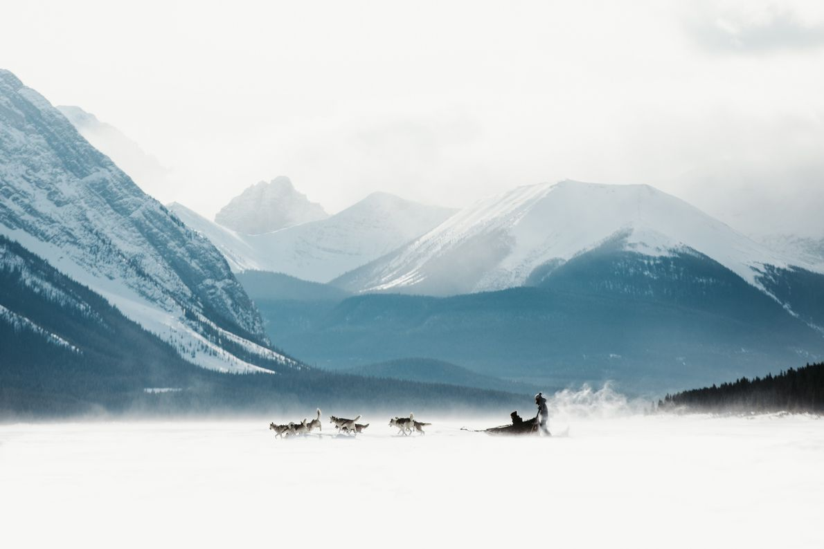 Dogs pulling a dogsled in Banff National Park, Alberta.