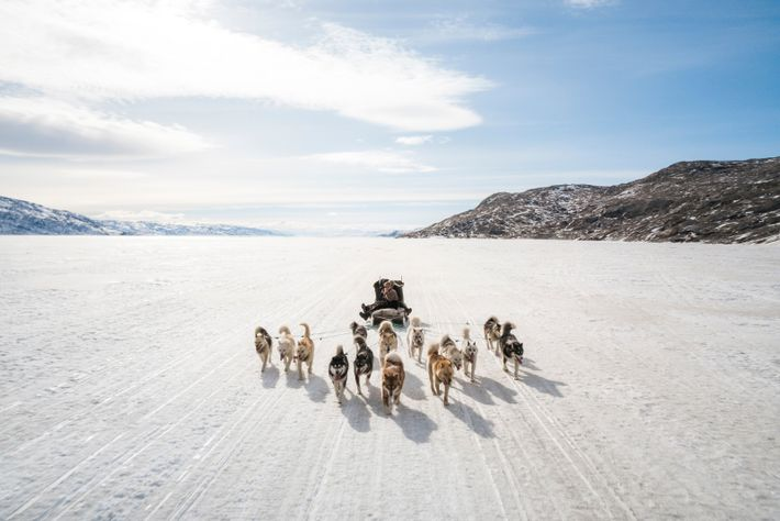 Dog sledding has been part of the Greenlandic way of life for centuries. Today, it remainsa ...