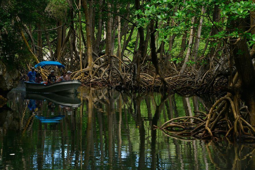A tour boat glides through mangroves in Los Haitises National Park, which is primarily accessible by ...