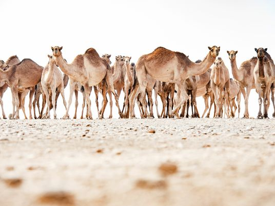 In pictures: the nomadic way of life in Oman's deserts