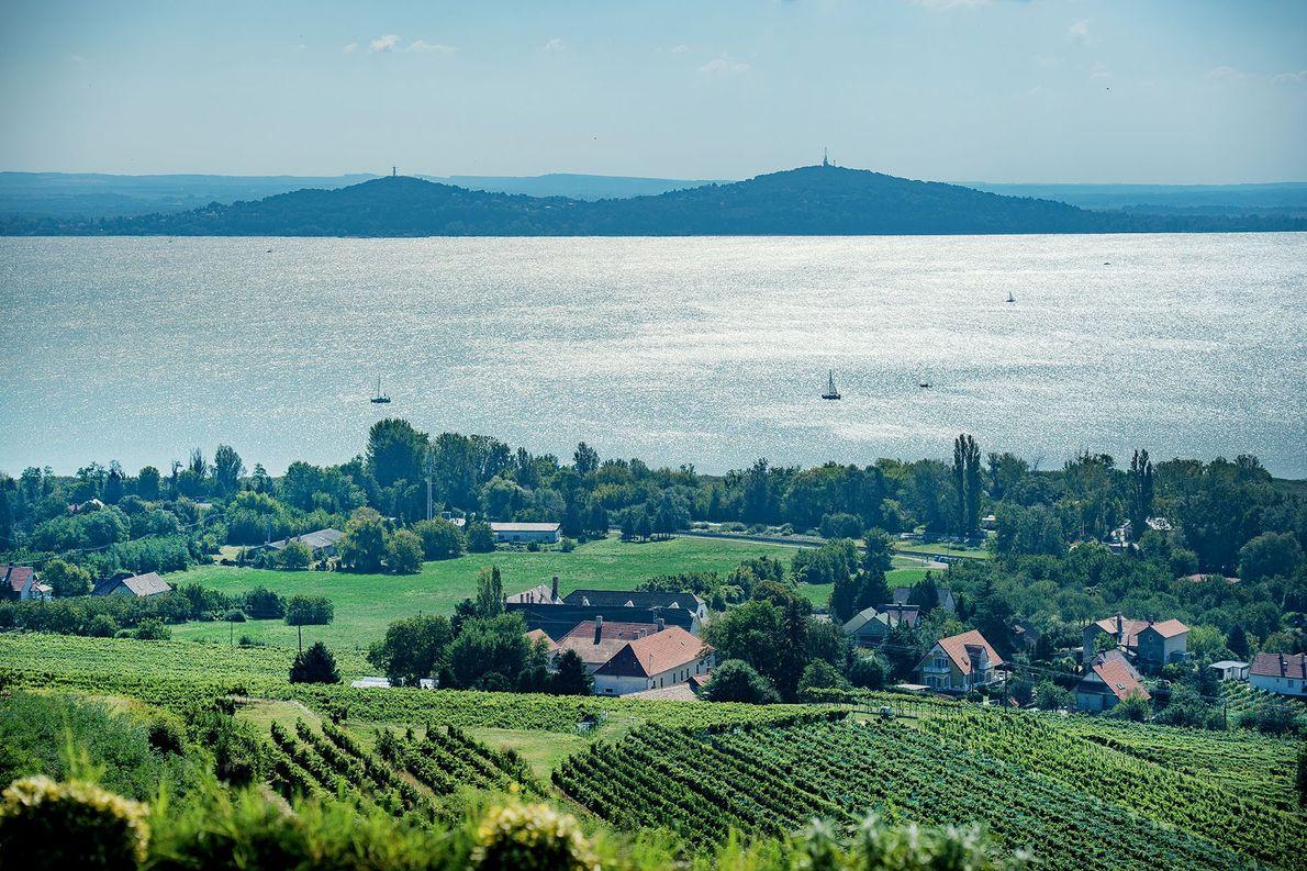 Badacsony Vineyards