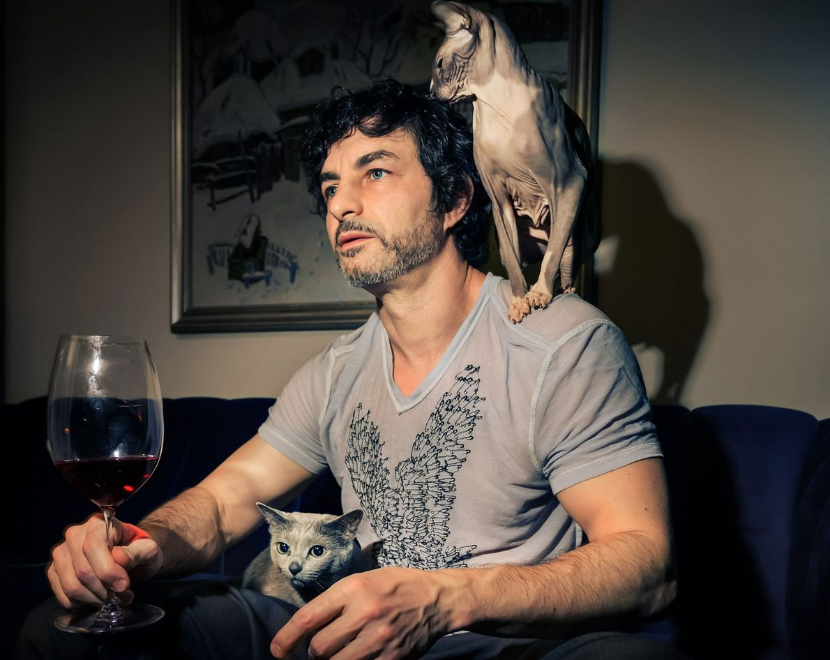 Ziggy, a sphynx cat, perches on Alex Kneller's shoulder while Luna sits on his lap in ...