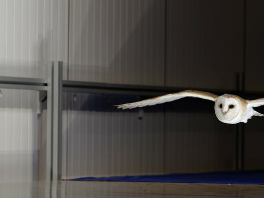 Owl wings may hold the key to turbulence-proof planes