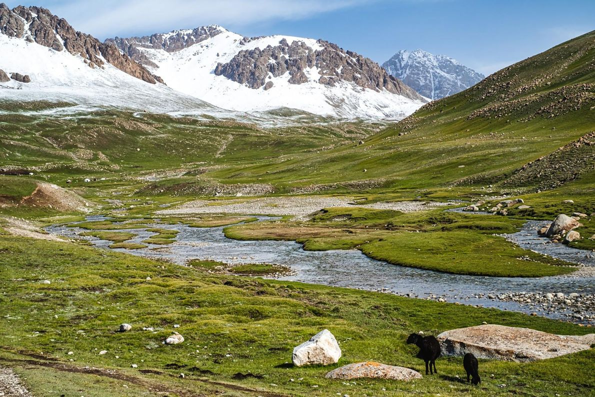 Mountain pasture in Alay Mountains.