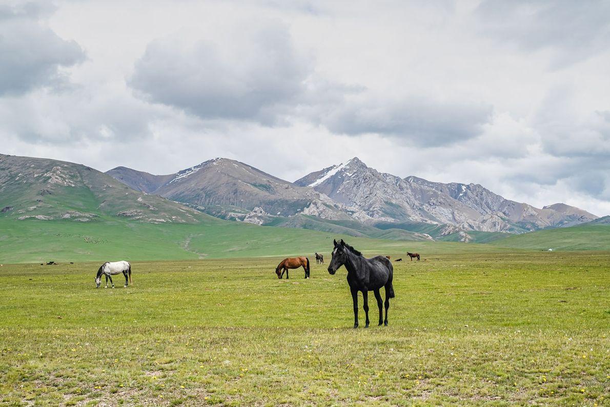 Horses on mountain pasture near Song Köl Lake.