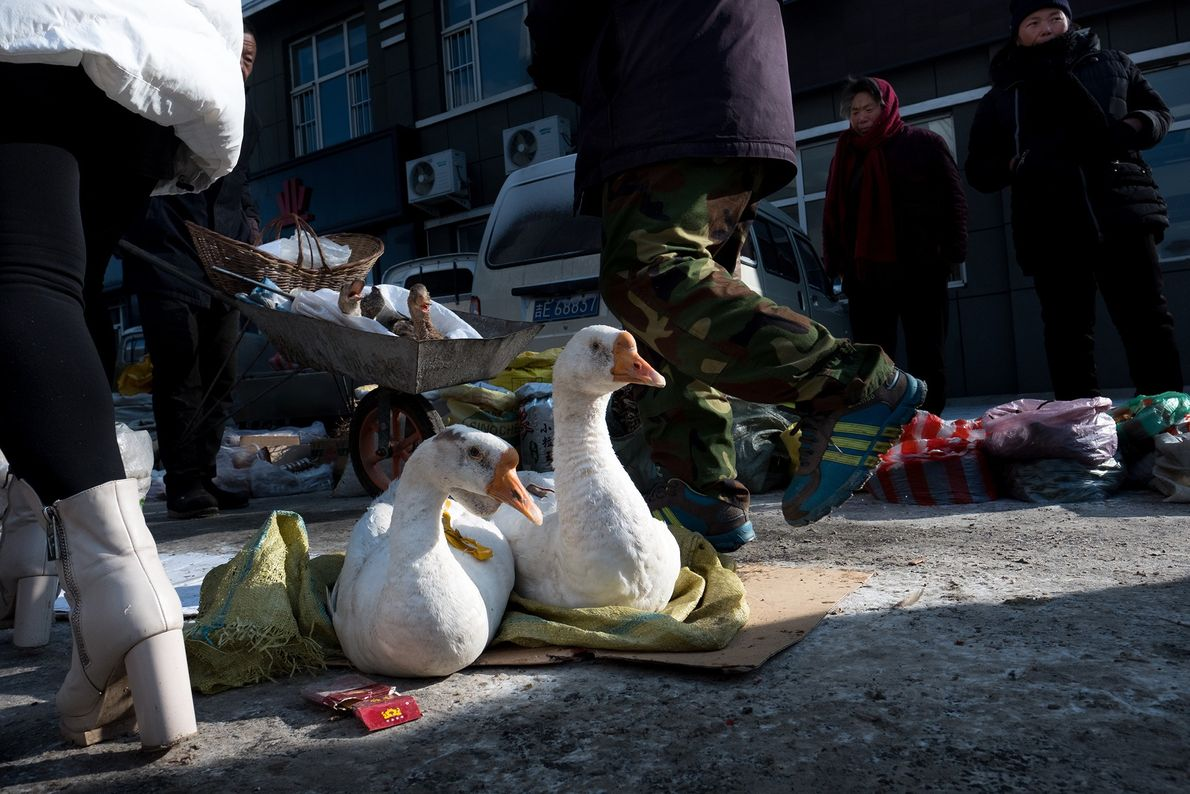 Sitting ducks are on display at a street market in Changbai Korean Autonomous County, China.