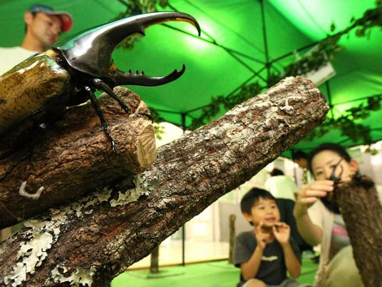 Why rare beetles are being smuggled to Japan at an alarming rate