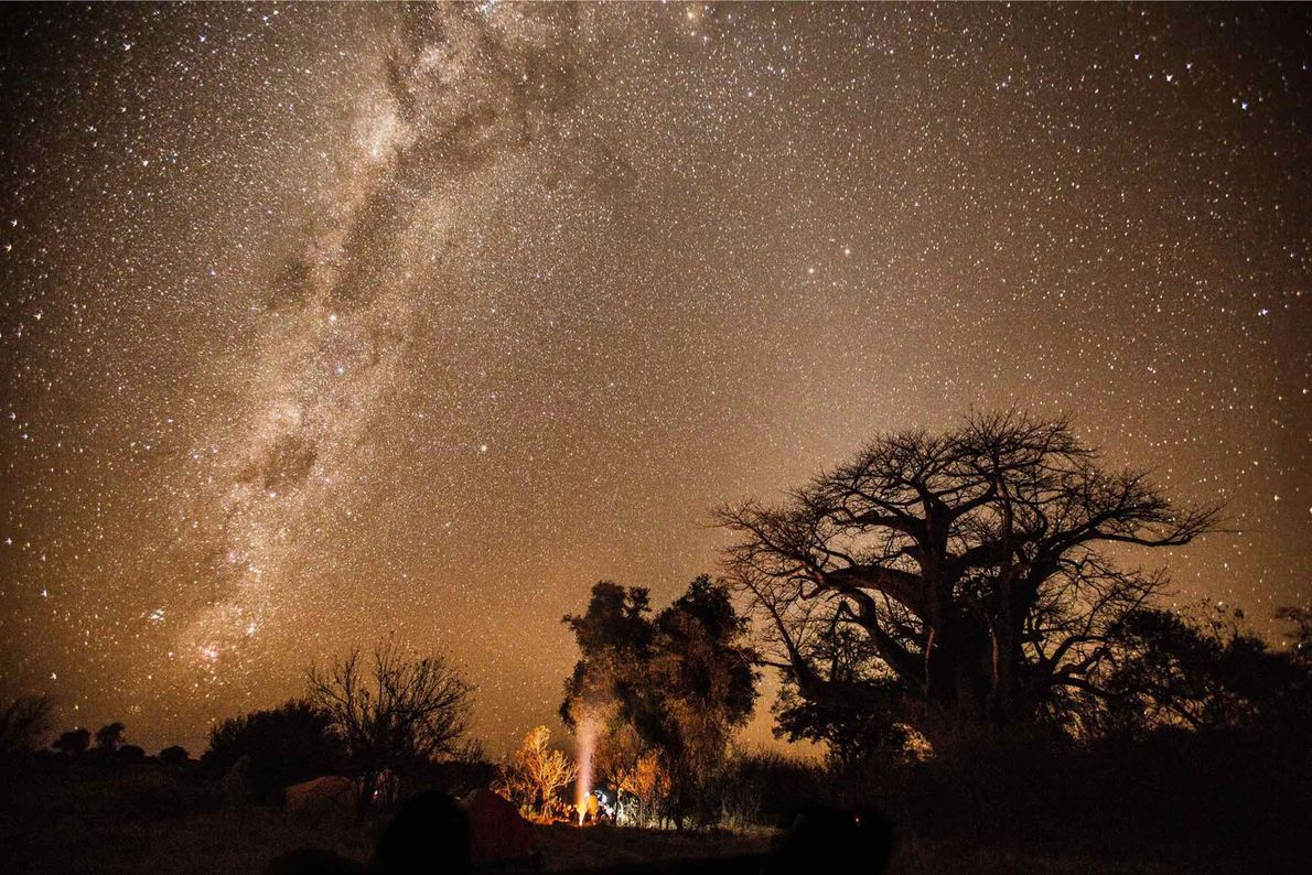 National Geographic Explorer Steve Boyes and his Okavango Wilderness Project team work to protect the most ...
