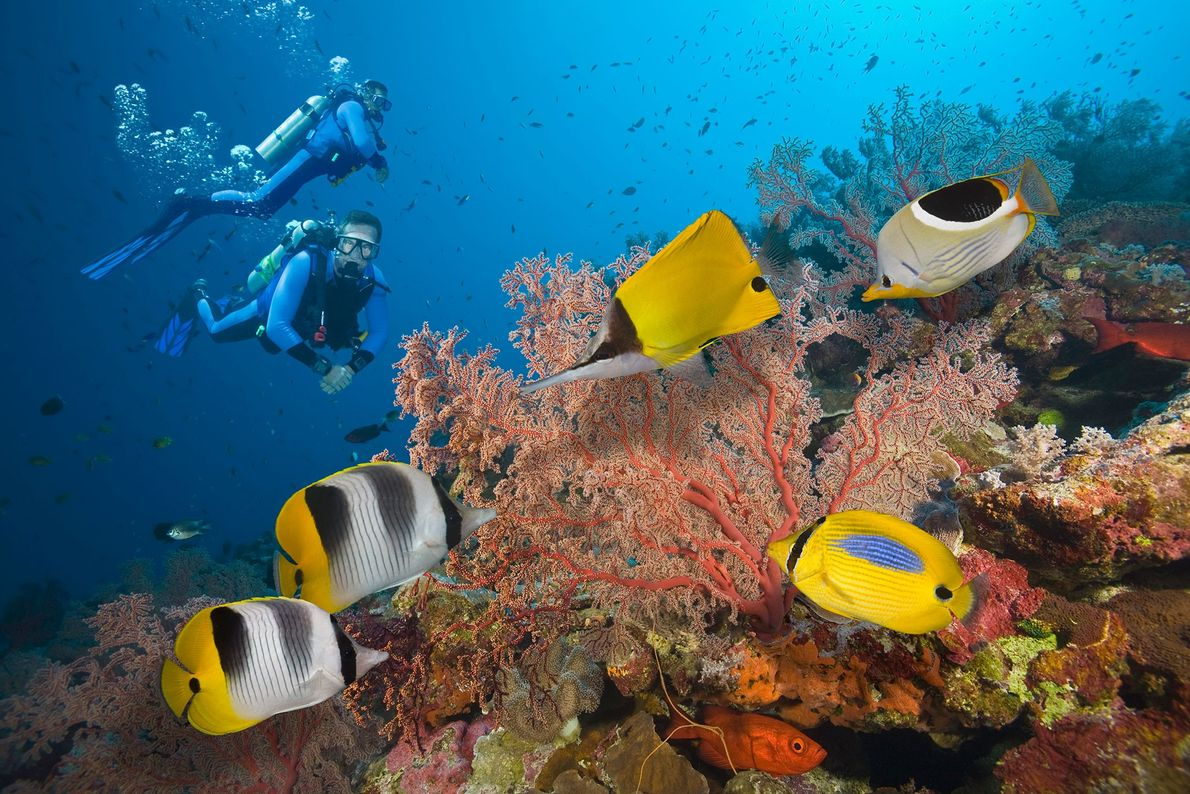 Two scuba divers explore the Great Barrier Reef, located in the South Pacific Ocean. Since 2016, ...