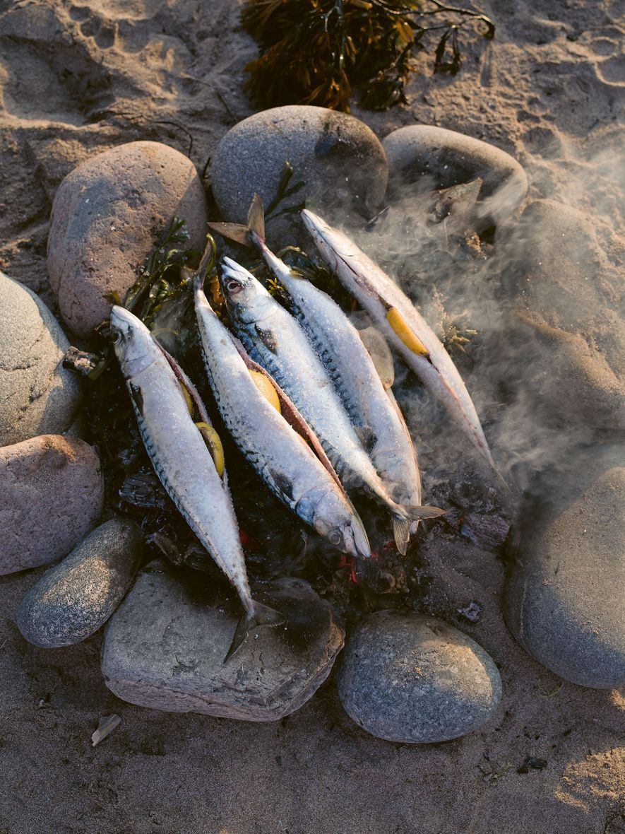 Line-caught mackerel being cooked on an open fire on the beach at West Ayre, Hillswick