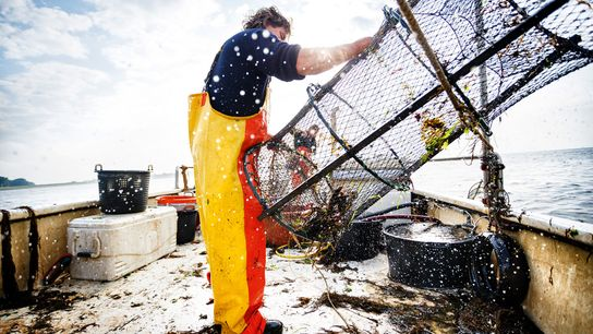 Fishing for lobster in the Eastern Scheldt during the lobster season, which runs from March to ...