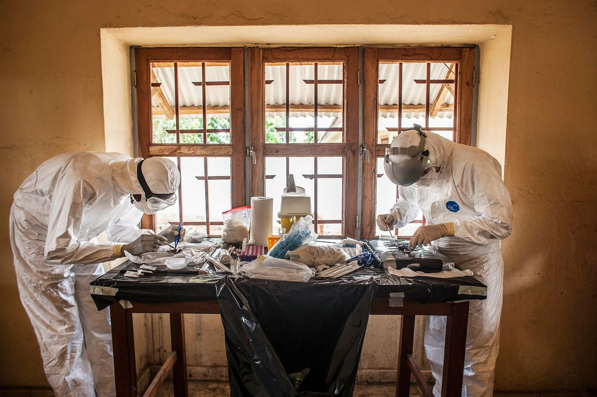 Two doctors perform necropsies on bats at a makeshift laboratory.