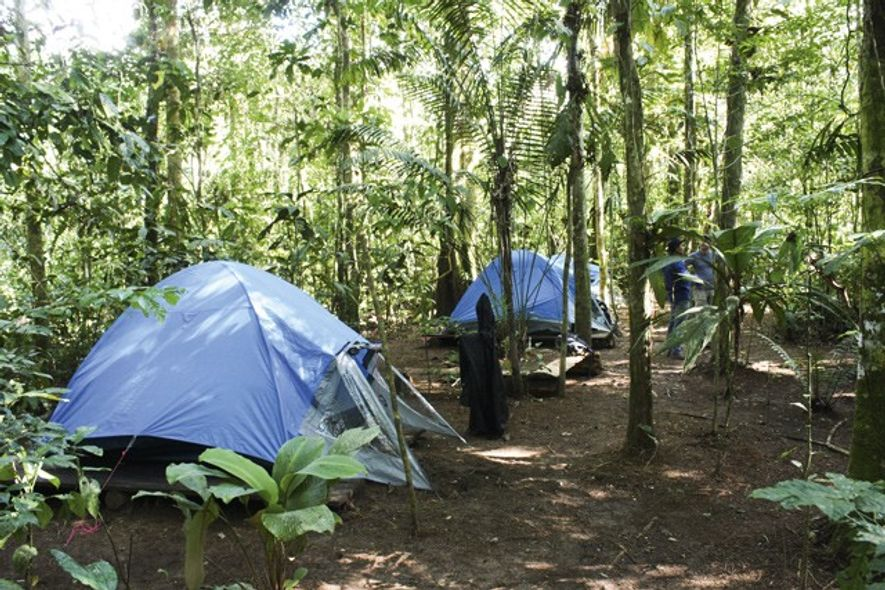 Tents at the first camp, in the thick of the rainforest. Image: Adrian Phillips