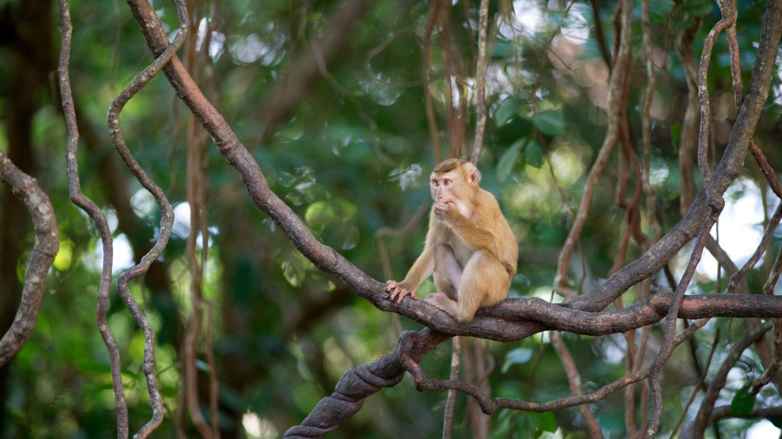 macaques-coconut-milk-01