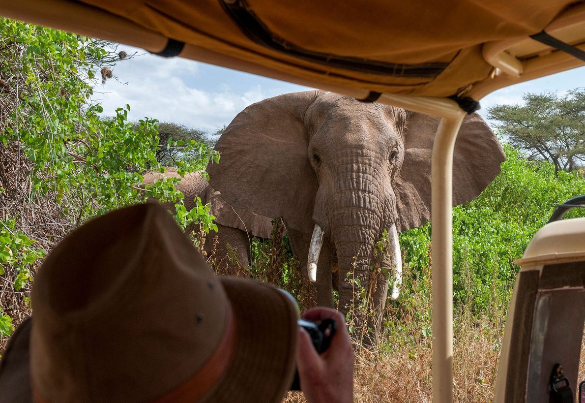 An elephant approaches a wildlife photographer inside Kenya's Maasai Mara National Reserve. For the safety of ...