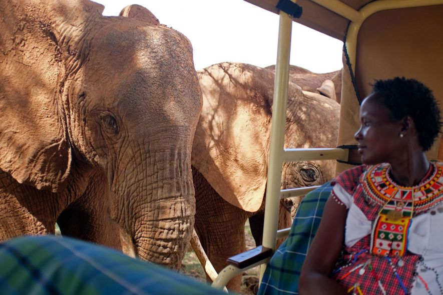 By mid-morning, most safari guides are winding up their morning drives and taking guests back for ...