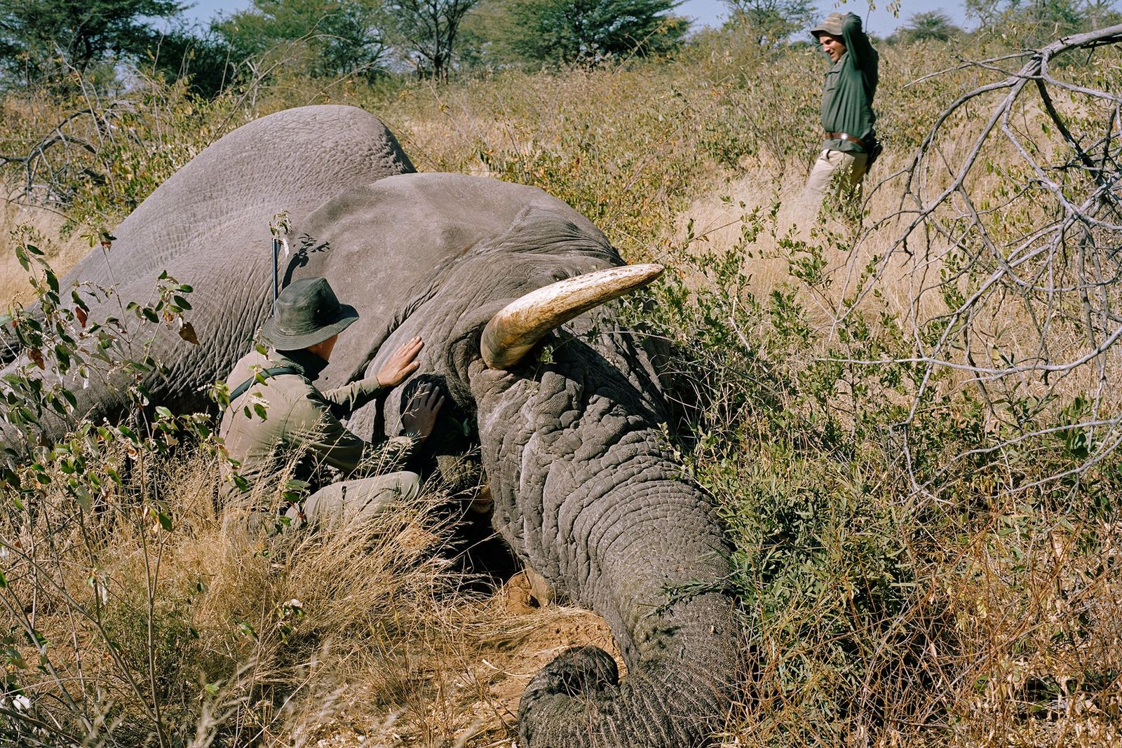 A German hunter kills an old bull elephant in Namibia. There is a long-running debate as ...