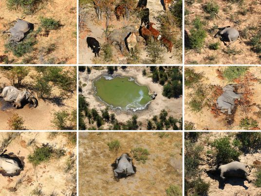 'Too early to rule anything out.' Fearing more deaths, scientists and conservationists race to explain Botswana's ...