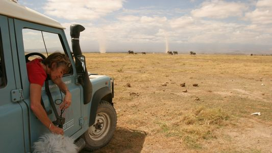 What are elephants really 'saying?' First-ever library reveals communication mysteries.