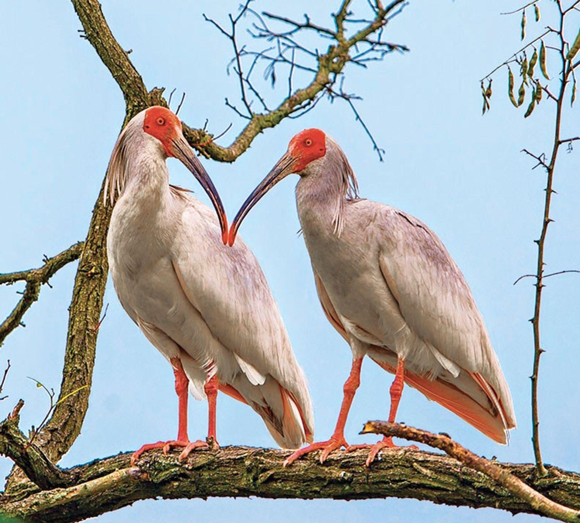 Birds are building simpler nests, plus laughing parrots!